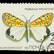 Stock Photo: USSR - CIRC1986: stamp printed in USSR, shows Butterfly Utet