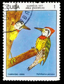 CUBA - CIRCA 1977: A stamp printed by CUBA, shows bird cuban gre — Stock Photo