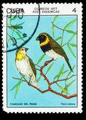 Cuba - por volta de 1977: um selo impresso em cuba, mostra pássaro tiaris ca — Fotografia Stock
