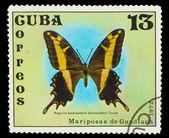 Kuba - ok. 1972: znaczek wydrukowany na kubie, pokazuje motyl papi — Zdjęcie stockowe
