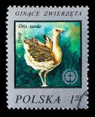 POLAND - CIRCA 1975: A Stamp printed in POLAND, shows image of a — Foto de Stock