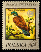 POLSKA - CIRCA 1975 : A Stamp printed in POLAND, shows image of — Stock Photo