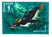USSR - CIRCA 1978: A stamp printed by USSR, shows zheltohohly ye — Stock Photo