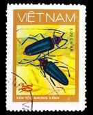 Wietnam - circa 1981: znaczek wydrukowany w wietnamie, pokazuje cętkowane bl — Zdjęcie stockowe