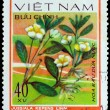 VIETNAM - CIRCA 1978: A stamp printed in VIETNAM, shows Jussiaea — Stock Photo