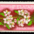 BULGARIA - CIRCA 1975: A Stamp BULGARIA, shows image branch of b — Stock Photo