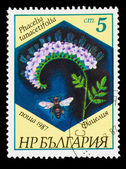 BULGARIA - CIRCA 1987: A stamp printed in BULGARIA, shows Phacel — Stock Photo