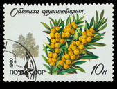 USSR - CIRCA 1980: A stamp printed in USSR, shows Hipp��pha�� rh — Stock Photo