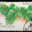 USSR - CIRCA 1987: A stamp printed in USSR shows Salvinia floati - Foto de Stock
