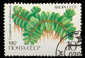 USSR - CIRCA 1987: A stamp printed in USSR shows Salvinia floati — Stock Photo
