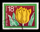 BULGARIA-CIRCA 1975: A stamp printed in BULGARIA, yellow Tulip ( — Stock Photo