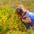 Stock Photo: Little girl smelling yellow flower and touches (Chamaecytisus