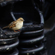 Wild sparrow bird sitting on railway wagon spring art photo — Stock Photo #23719047