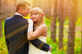 Sunlight Bride and groom standing in a pine forest in autumn, ne — Stock Photo