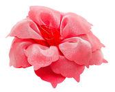 Fermacapelli capelli rosso fiore isolato ritaglio p — Foto Stock