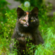Unusual multicolored cat sitting in green grass and looking at t - Stock Photo