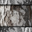 Bark of birch tree texture old background wallpaper — Stock Photo #25819439