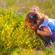 Little baby girl studying touching look yellow flower(Chamaecyti — Stockfoto