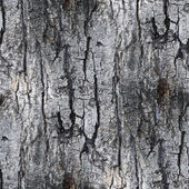 Gray seamless texture white tree bark wallpaper background your — Stock Photo