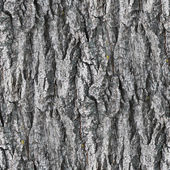 Seamless texture gray white tree bark wallpaper background your — Stock Photo