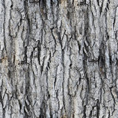 Seamless texture white tree bark wallpaper gray background your — Stock Photo
