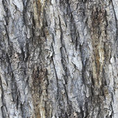 Seamless texture white tree gray bark wallpaper background your — Stock Photo