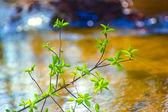 Elm tree branch over water in spring with a beautiful background — Stock Photo