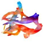 Watercolor orange, blue paint background blob ink design color s — Stock Photo