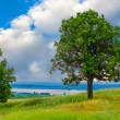 Tree green sky oak field landscape grass blue nature environment — Stock Photo