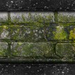 Stock Photo: moss old green wall stone pattern mold gray texture background r