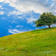 Field tree green sky hill grass landscape blue summer spring nat — Stock Photo