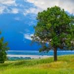 Green sky tree oak field landscape grass blue nature environment — Stock Photo