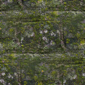 Seamless moss old green wall stone pattern mold gray texture bac — Stock Photo