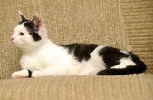 Cat lying on a sofa — Stock Photo