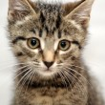 Cute tabby kitten — Stock Photo