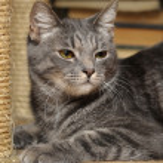 Gray striped cat — Stock Photo #13182984