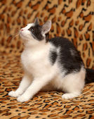 White kitten with black spots — Stock Photo