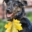 Autumn dog — Stock Photo