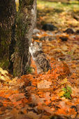 Cat sharpening his claws on a tree in the autumn park — Stock Photo