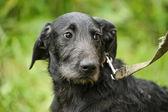 黑色杂种狗 — 图库照片