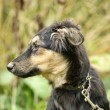 Half-breed puppy — Stockfoto