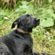 Black mongrel dog — Stockfoto