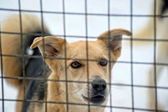 Dog in his cage at the animal shelter — Stock Photo