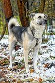 Half-breed dog — Stock Photo
