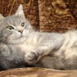 Beautiful gray cat — Stock Photo #15352407