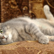 Beautiful gray cat — Stock Photo #15352539