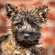 Dog terrier - Stock Photo