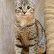 Young tabby cat - Stock Photo