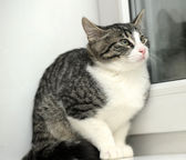 Cat at a window — Stock Photo