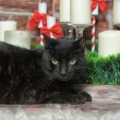Black cat - Stockfoto